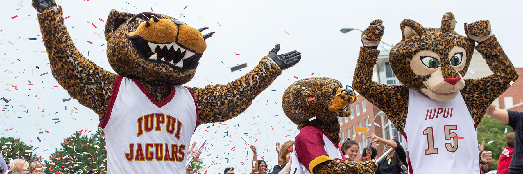 IUPUI's three jaguar mascots (order, Jawz, Jinx, and Jazzy) walk down the street during a parade in downtown Indianapolis. Jawz and Jazzy have their arms raised in a cheer. Colorful confetti surrounds them.